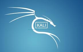 Picture linux, dragon, Mr Robot, Kali, kali linux