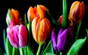 Wallpaper leaves, tulips, petals, spring
