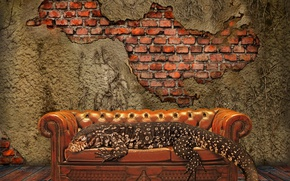 Picture Wall, pattern, floor, sofa, lizard, couch