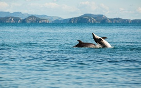 Picture sea, playing, enjoying, dolphins