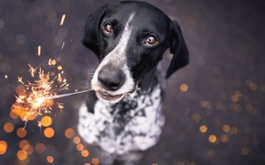 Picture each, dog, sparklers