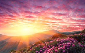 Picture the sun, rays, sunset, flowers, mountains
