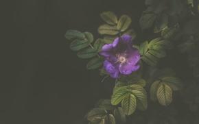 Picture flower, leaves, macro, Wallpaper, Bush
