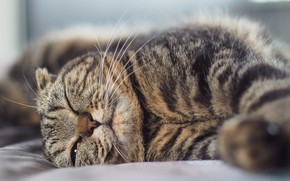 Picture tabby cat, lying on his side, squints