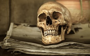 Picture sake, human, bones, teeth