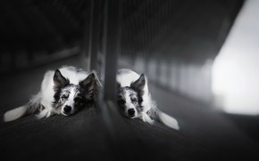 Picture each, dog, mirror