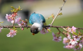 Picture flowers, bird, branch, parrot, flowering
