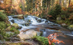 Picture stones, stream, grass, the sun, forest, autumn, Selkefall, moss, the bushes, trees, Germany