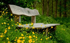 Picture forest, grass, flowers, Park, bench