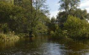 Picture Nature, Trees, River, Forest, Nature, River, Forest, Trees