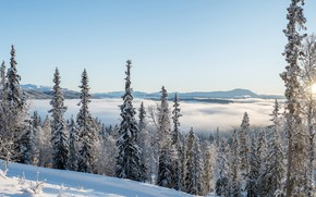 Picture winter, forest, snow, trees, Norway, panorama, Norway, Buskerud, Skirvedalen, Buskerud county