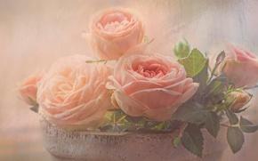 Picture leaves, flowers, background, roses, bouquet, light, petals, art, haze, pot, pink, buds, gently, dissolution, composition, …