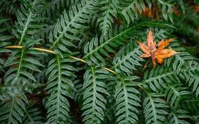 Wallpaper leaf, sheet, green, leaves
