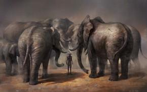 Wallpaper aboriginal, arrow, Who did, the court, elephants, hunter