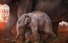 Picture baby, elephants, elephant