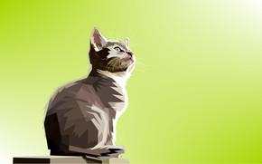 Wallpaper cat, cat, triangles, Kota