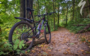 Picture road, autumn, forest, leaves, bike, Park, sport, bike, forest, bicycle, road, bike, park, cycle, autumn, …