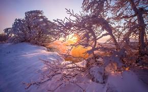 Wallpaper dawn, sunrise, The Jura Mountains, Jura mountains, trees, winter, Switzerland, snow, Switzerland, morning