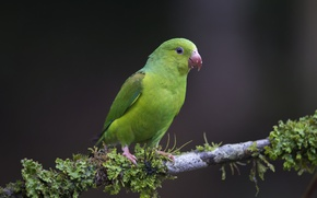 Picture nature, bird, branch, parrot