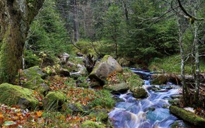 Picture forest, river, stream
