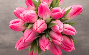 Picture flowers, bouquet, tulips, fresh, pink, flowers, beautiful, tulips, spring, pink tulips