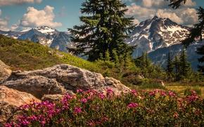 Picture trees, flowers, mountains, ate, Washington, The cascade mountains, Washington State, Cascade Range