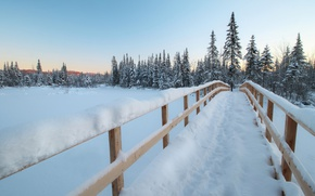 Picture winter, forest, snow, bridge, ate, Canada, Canada, Quebec, QC, Marshes of the North