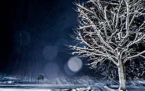 Wallpaper nature, winter, snow, night, bokeh, tree