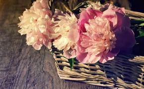 Wallpaper beautiful, basket, pink, wood, peonies, pink, flowers, peony