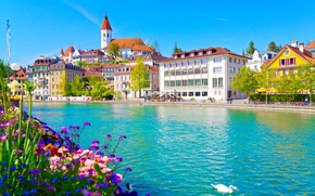 Wallpaper river, promenade, building, Aare river, Swan, home, Switzerland, Aare River, Thun, Tun, Switzerland, flowers