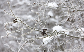 Picture winter, frost, forest, trees, branches, tree, branch, cold