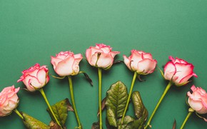 Picture flowers, roses, pink, buds, fresh, pink, flowers, romantic, roses, tender