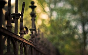 Picture greens, summer, the fence, fence, Bloor, bokeh, cov in a