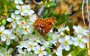 Picture Macro, Spring, Butterfly, Flowers, Spring, Flowering, Macro, Butterfly, Flowering