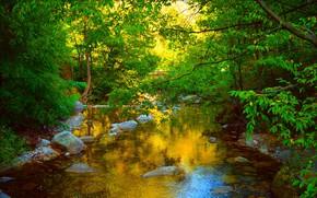 Wallpaper Greens, Nature, Pond, Stones, Nature, Green, Pond
