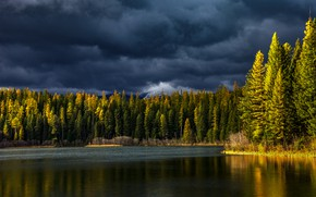 Picture autumn, forest, the sky, light, clouds, shore, ate, pond, Christmas trees, coniferous, the tops of …