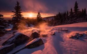 Picture winter, the sun, light, snow, trees, nature, stones