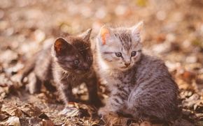 Picture kittens, kids, a couple, bokeh, two kittens