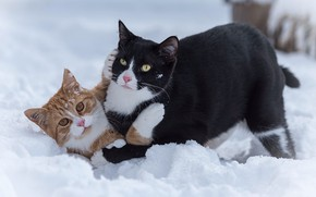 Picture snow, game, cats, koteyki, two cats