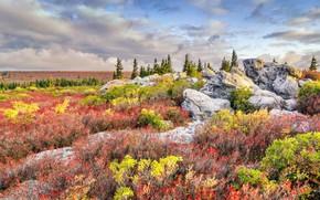 Picture grass, flowers, stones, USA, West Virginia, reserve, Bear Rocks Preserve
