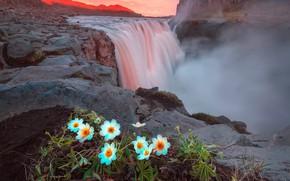 Wallpaper rocks, summer, Iceland, the evening, waterfall, mountains, light, flowers