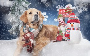Wallpaper snowmen, snowflakes, scarf, snow, dog, Golden Retriever, Golden Retriever