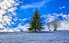 Picture winter, the sky, clouds, tree, tree, spruce