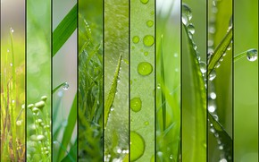 Picture greens, summer, grass, Rosa, rendering, collage, spring, raindrops