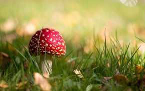 Picture autumn, nature, mushroom, mushroom