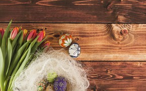 Picture Tulips, Easter, Eggs, Holiday, Socket