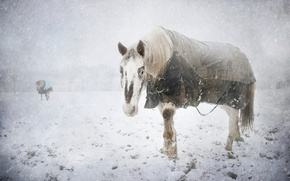 Picture cold, winter, snow, horse