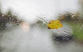 Wallpaper drops, glass, sheet