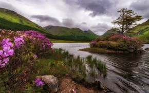 Picture trees, flowers, mountains, nature, rock, lake, island, Scotland