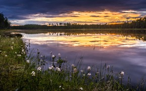Picture summer, sunset, flowers, nature, river